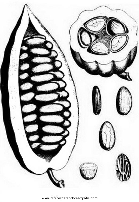 alimentos/fruta/cacao_1.JPG