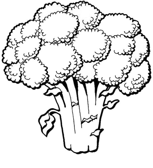 alimentos/verdura/brocoli_01.JPG