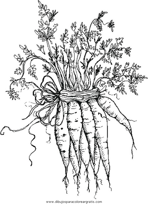 alimentos/verdura/carote_b.JPG
