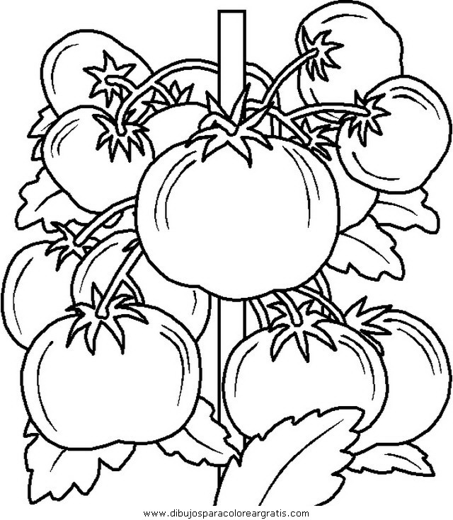 alimentos/verdura/verdura_34.JPG