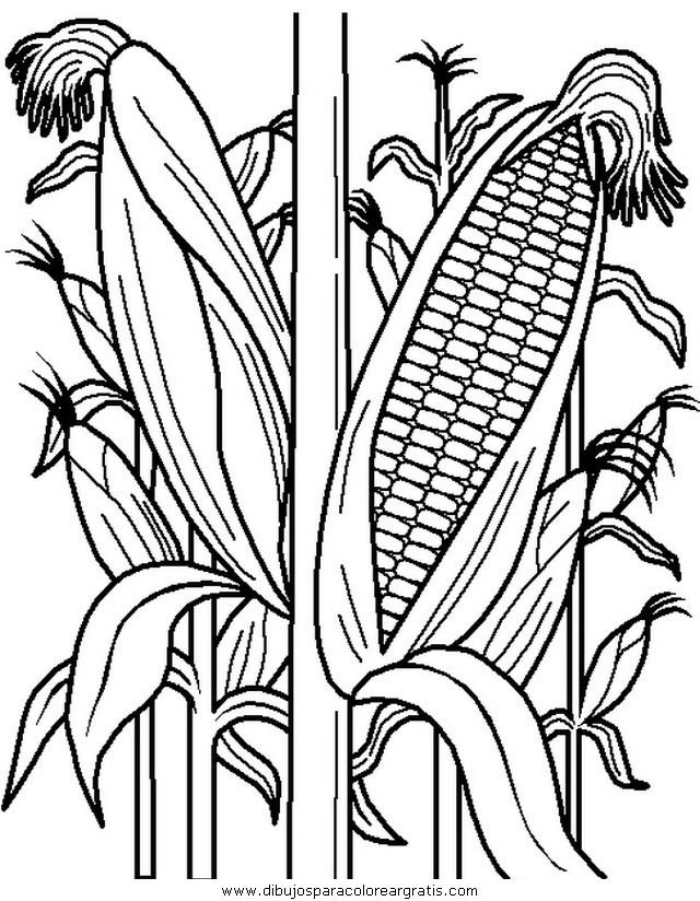 alimentos/verdura/verdura_42.JPG