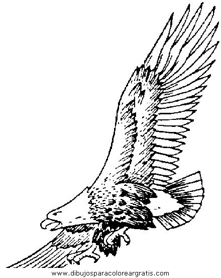 animales/aguilas/aguila_aguile_5.JPG