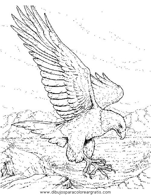 dibujos animales/aguilas/aguila_aguile_7.JPG