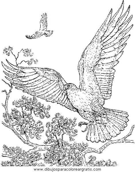 animales/aguilas/aguila_aguile_8.JPG