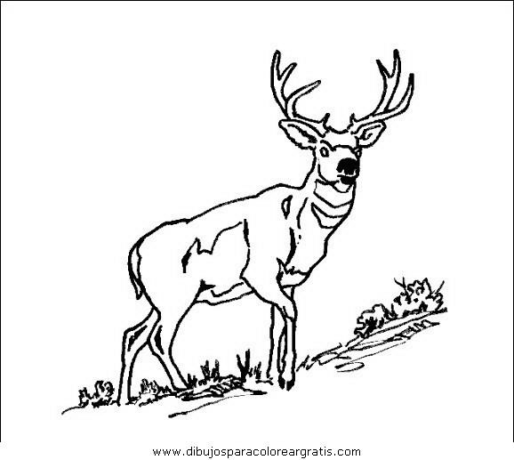 animales/animales_varios/animales_varios_002.JPG