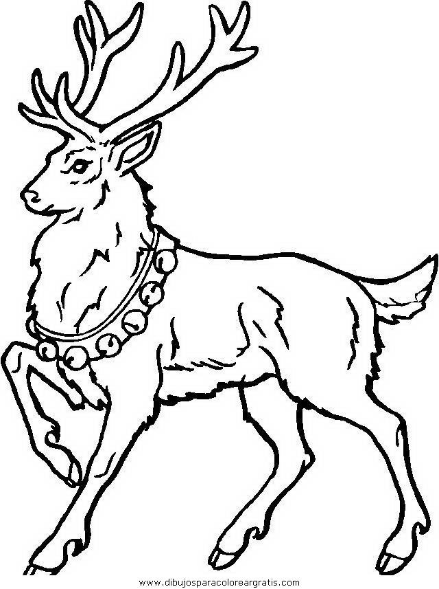 animales/animales_varios/animales_varios_004.JPG