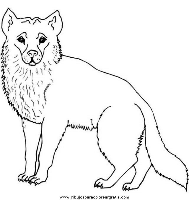 animales/animales_varios/animales_varios_009.JPG