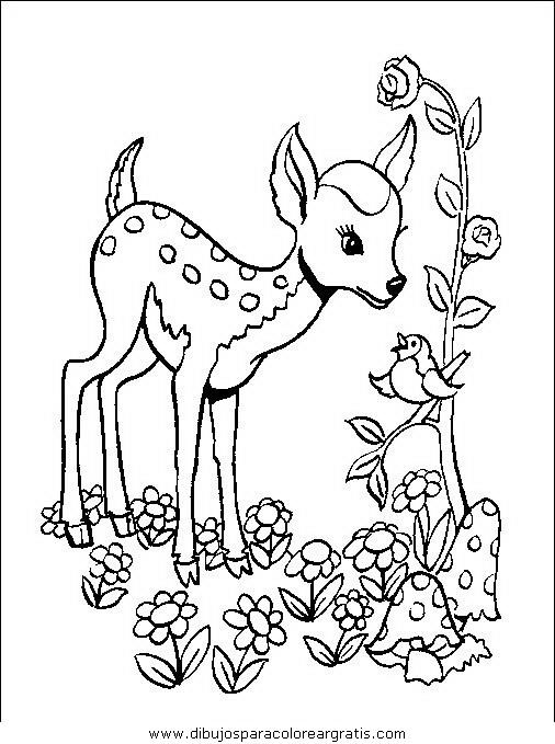 animales/animales_varios/animales_varios_056.JPG