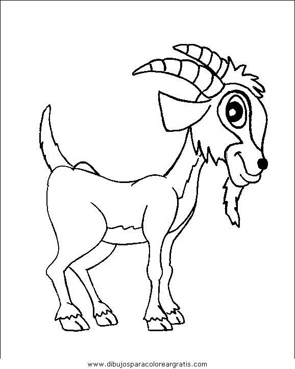 animales/animales_varios/animales_varios_066.JPG