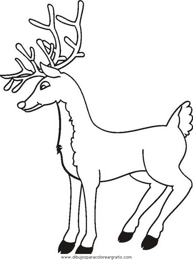animales/animales_varios/animales_varios_099.JPG