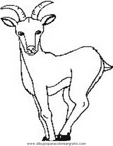 animales/animales_varios/animales_varios_101.JPG