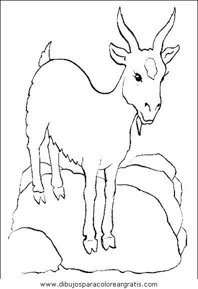 animales/animales_varios/animales_varios_110.JPG