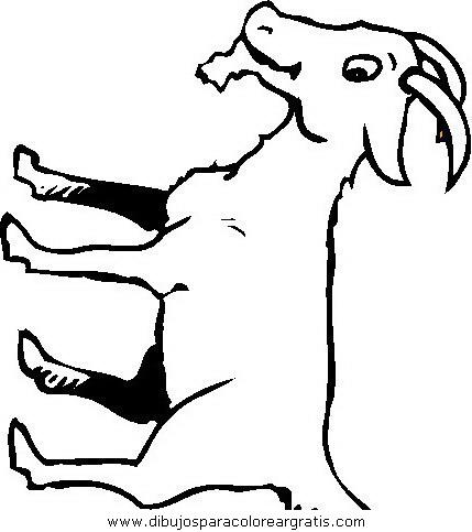 animales/animales_varios/animales_varios_111.JPG