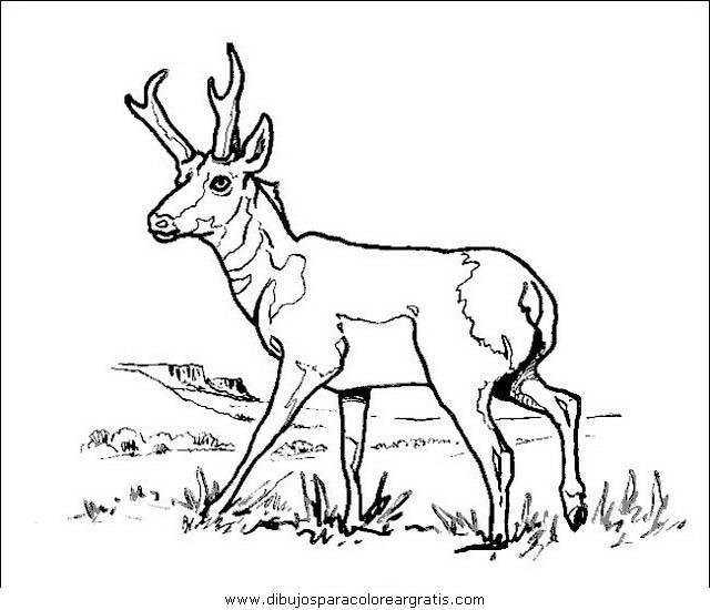 animales/animales_varios/animales_varios_115.JPG