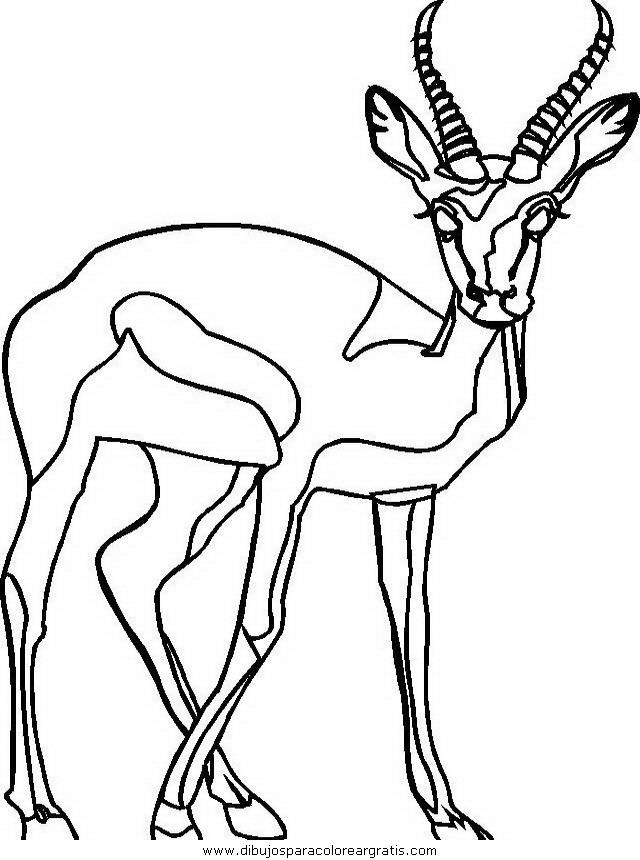 animales/animales_varios/animales_varios_116.JPG