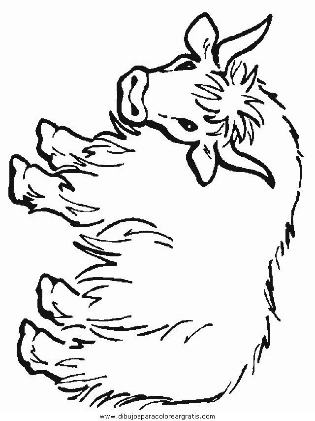 animales/animales_varios/animales_varios_138.JPG