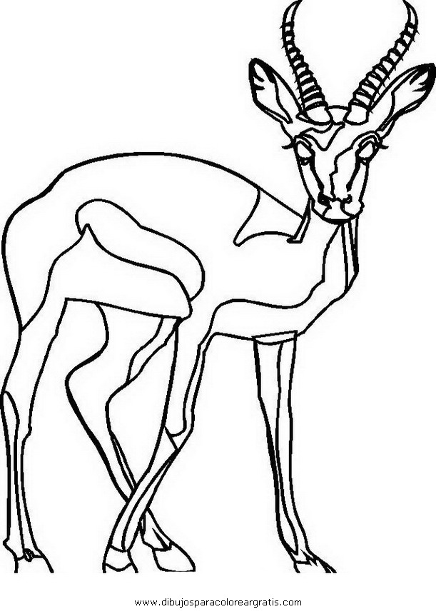 animales/animales_varios/antilope_1.JPG
