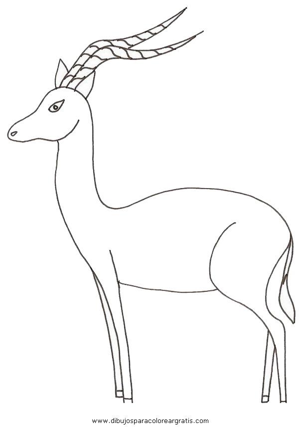 animales/animales_varios/antilope_impala2.JPG