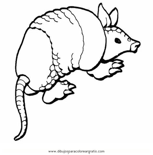 Dibujo Armadillo En La Categoria Animales Diseños