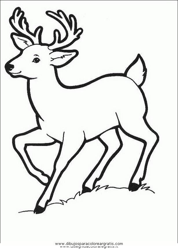 animales/animales_varios/ciervo_1.JPG