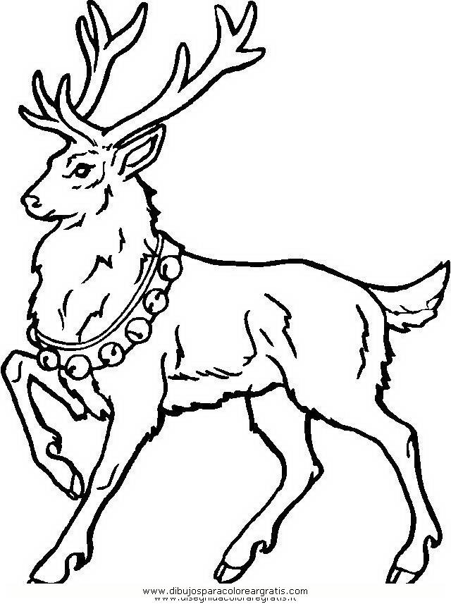 animales/animales_varios/ciervo_2.JPG