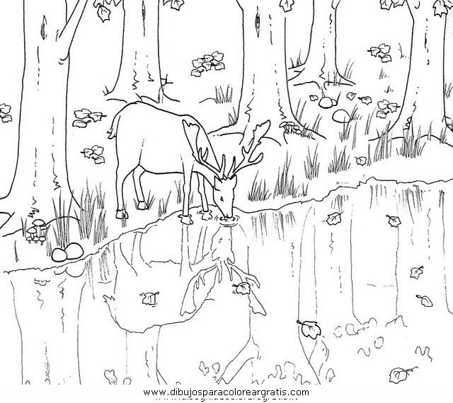 animales/animales_varios/ciervo_3.JPG