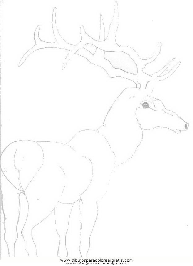 animales/animales_varios/ciervo_5.JPG