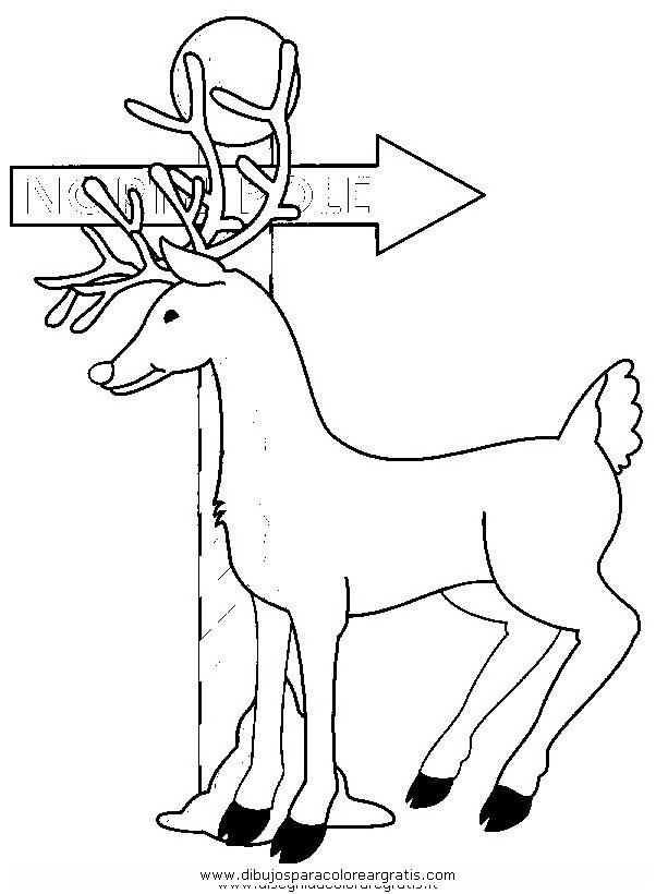 animales/animales_varios/ciervo_6.JPG