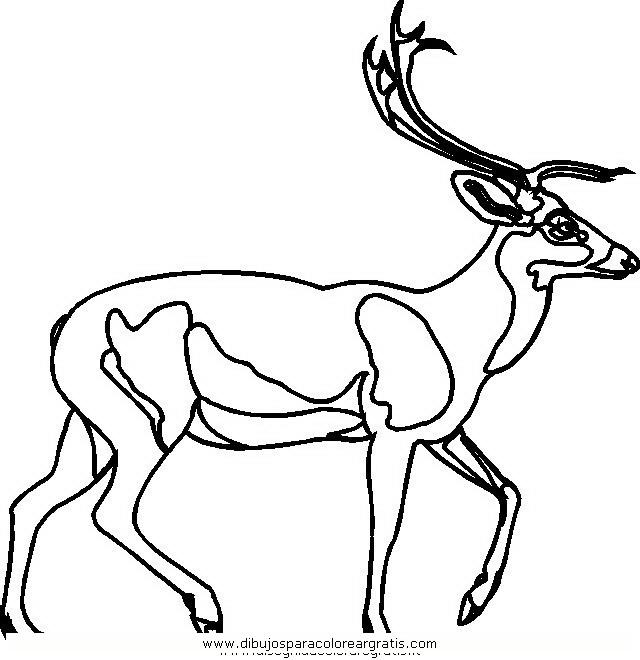 animales/animales_varios/ciervo_7.JPG