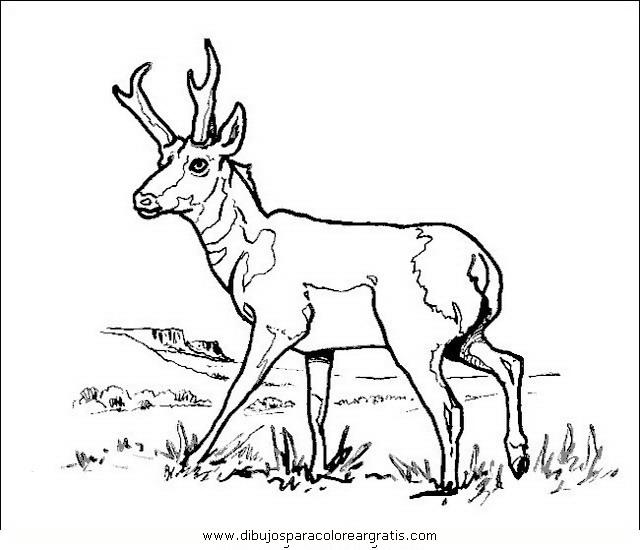 animales/animales_varios/ciervo_8.JPG
