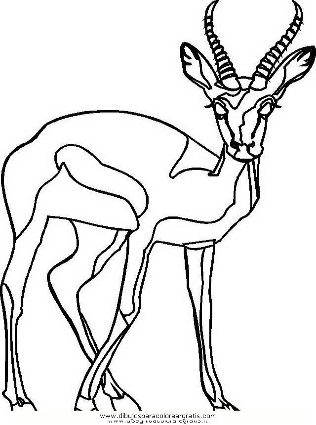 animales/animales_varios/ciervo_9.JPG