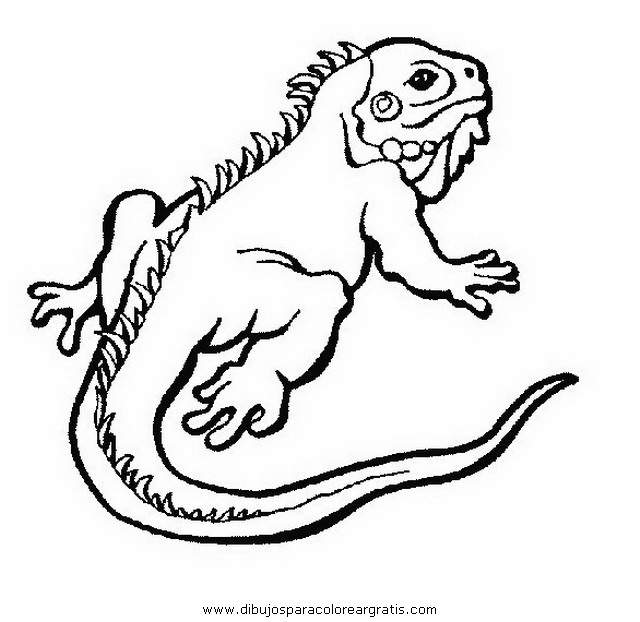 Iguanas dibujos para colorear - Imagui