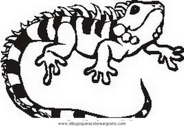 animales/animales_varios/iguana_iguanas_16.JPG