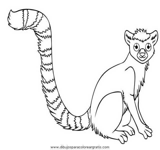 animales/animales_varios/lemur_7.JPG