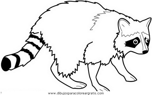 animales/animales_varios/mapache_5.JPG