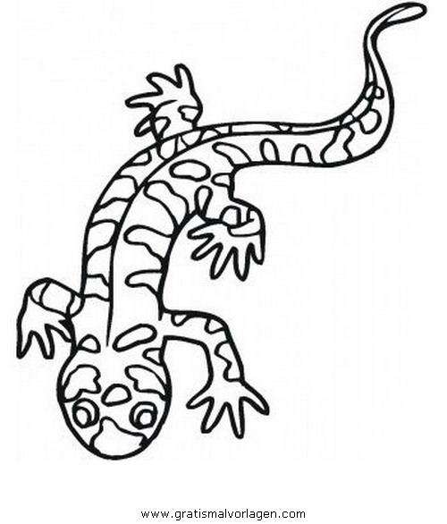 animales/animales_varios/salamandra_3.JPG