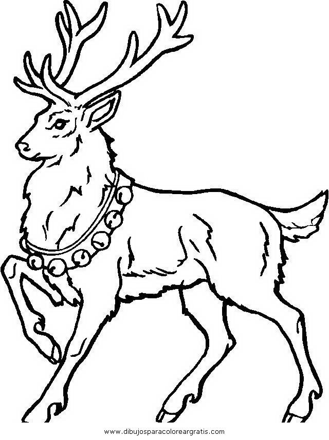 animales/animales_varios/venado_venados_2.JPG