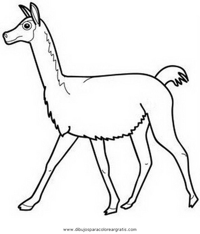 Dibujo Vicuna2 En La Categoria Animales Diseños