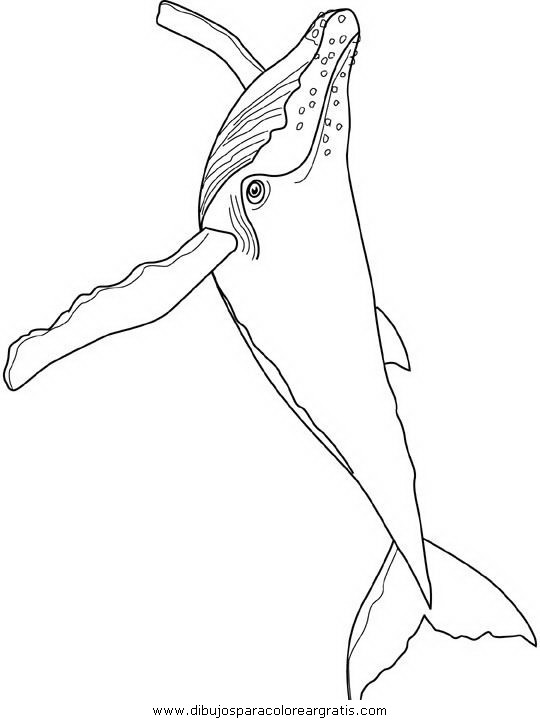 animales/ballenas/ballena_ballenas_07.JPG