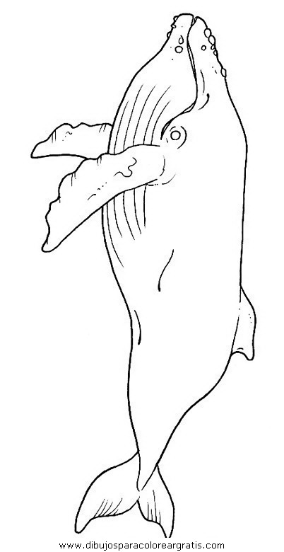 animales/ballenas/ballena_ballenas_19.JPG