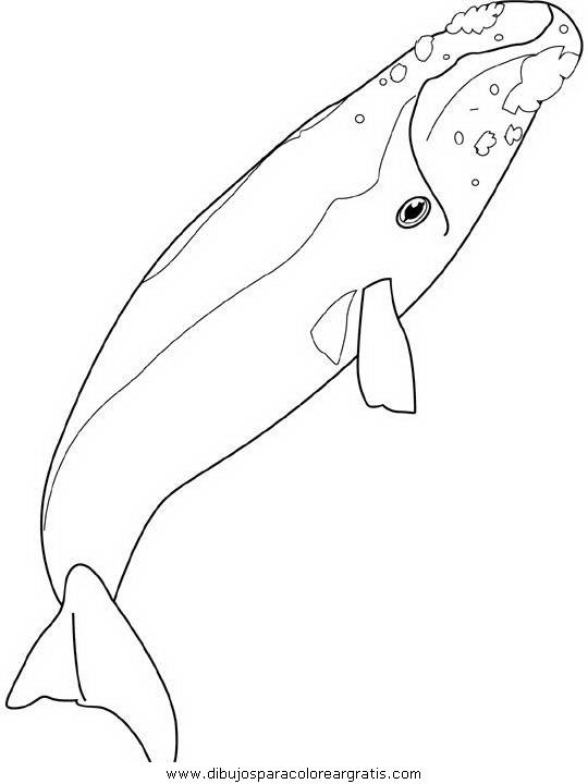 animales/ballenas/ballena_ballenas_21.JPG