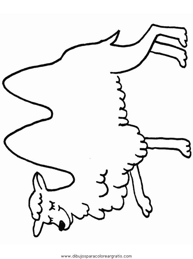 animales/camellos/camellos_02.JPG