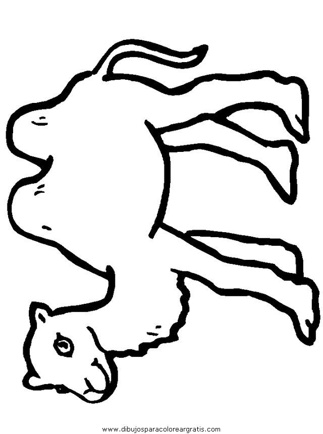 animales/camellos/camellos_03.JPG