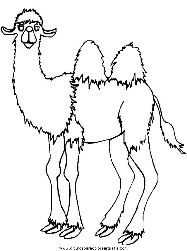 animales/camellos/camellos_05.JPG