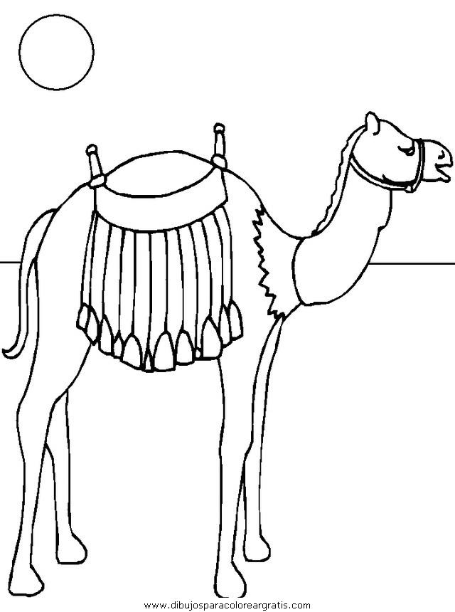 animales/camellos/camellos_07.JPG
