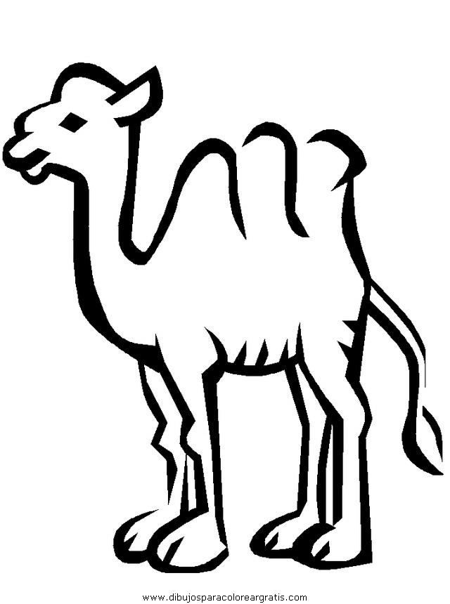 animales/camellos/camellos_08.JPG
