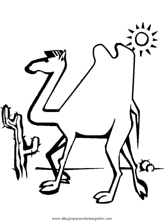 animales/camellos/camellos_09.JPG
