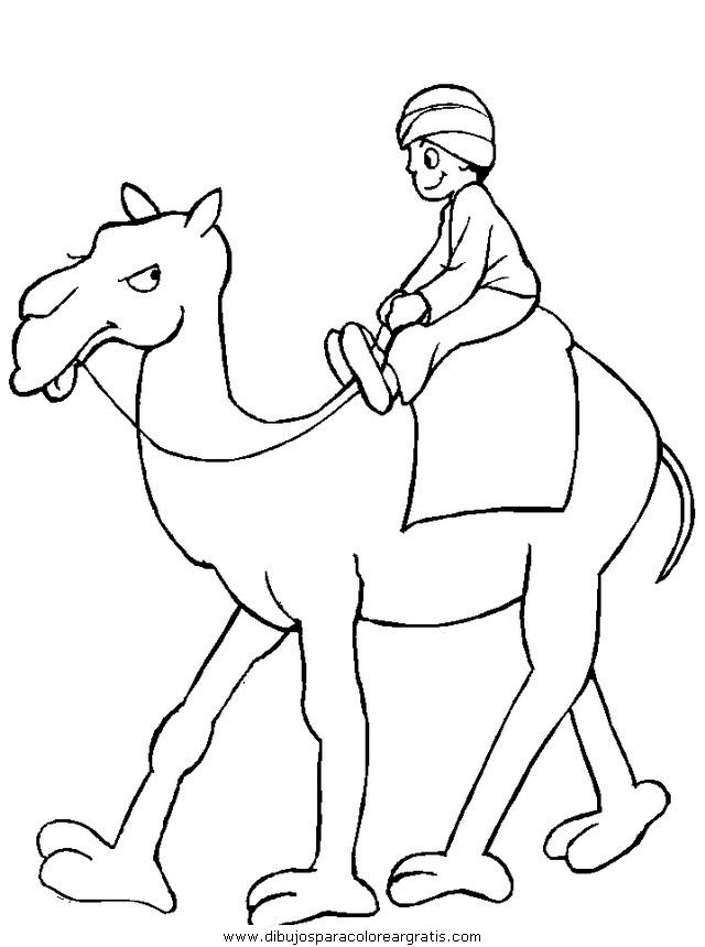 animales/camellos/camellos_12.JPG