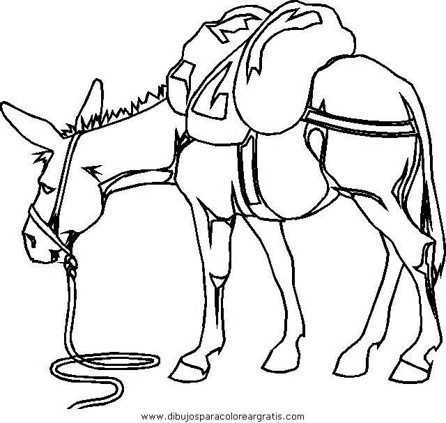 animales/cavallos/cavallos_01.JPG