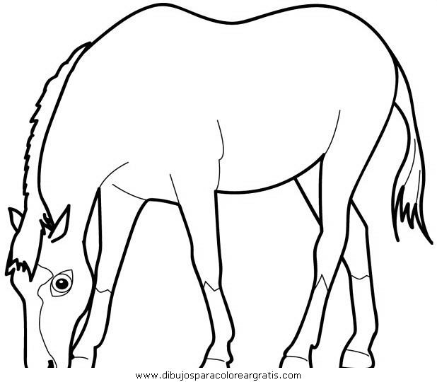 animales/cavallos/cavallos_02.JPG